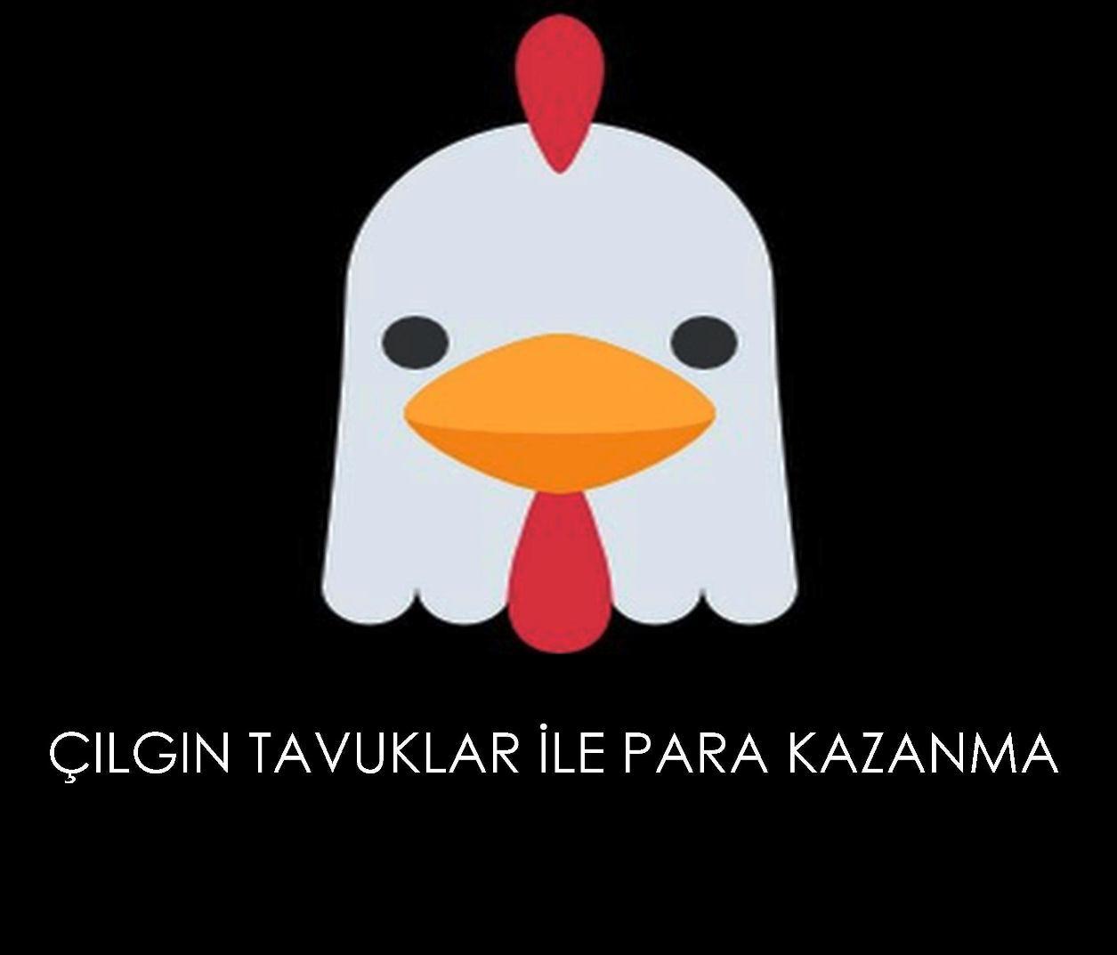 cilgin-tavuklar